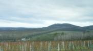 ワイン用のブドウ畑が目立つ。