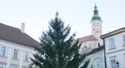 ここにもクリスマスツリーが