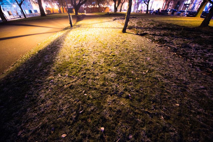 芝が霜だらけ