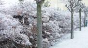 敷地内の雪化粧がきれいだった