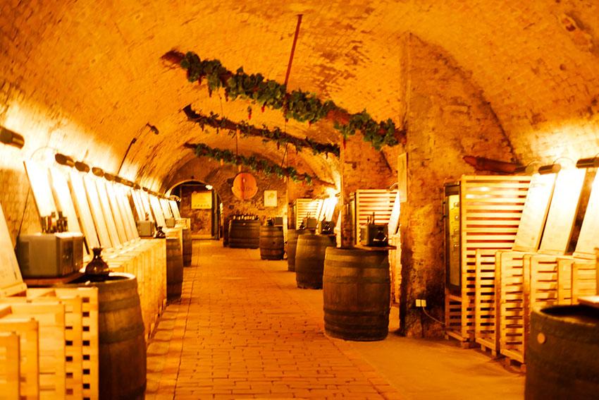 地下にはチェコワインTOP100がそろい、試飲できる。